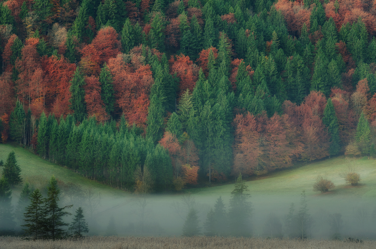 About forests and trees